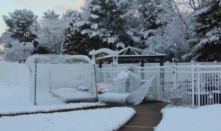 Winter Gardening: MarchGarden