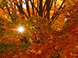 sunlight-twinkle.jpg