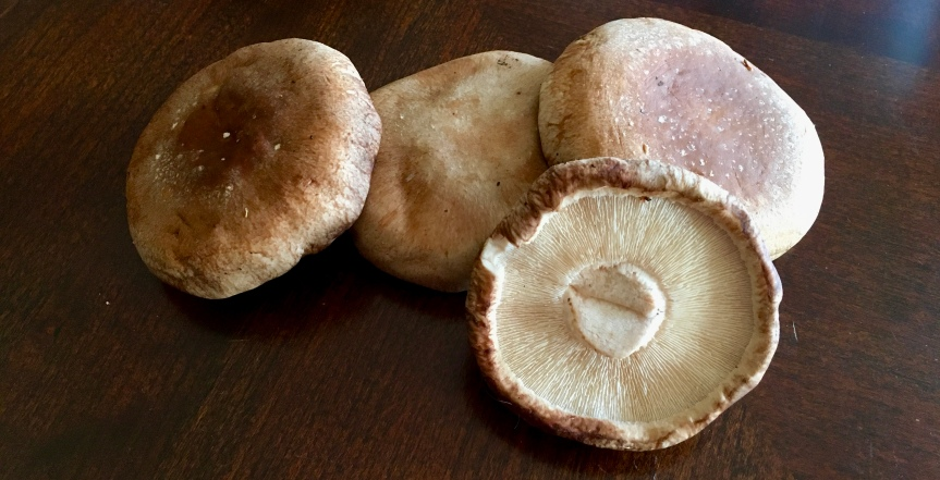 Spotlight on Shiitake Mushrooms